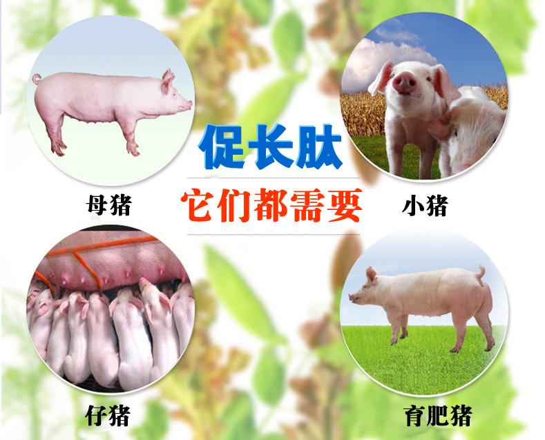 猪催肥剂日长三斤那家可靠?