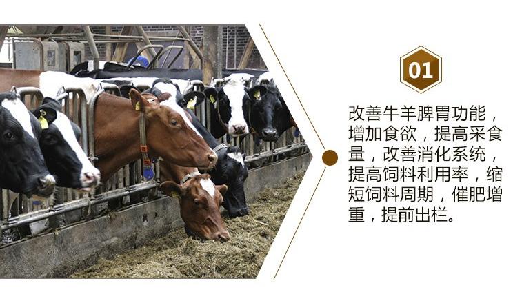 肉牛催肥药多少钱?