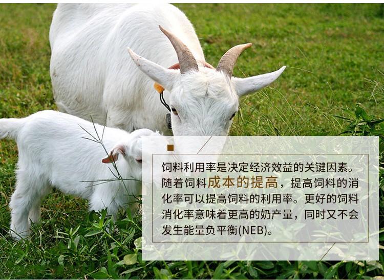 牛羊催肥用什么药好?