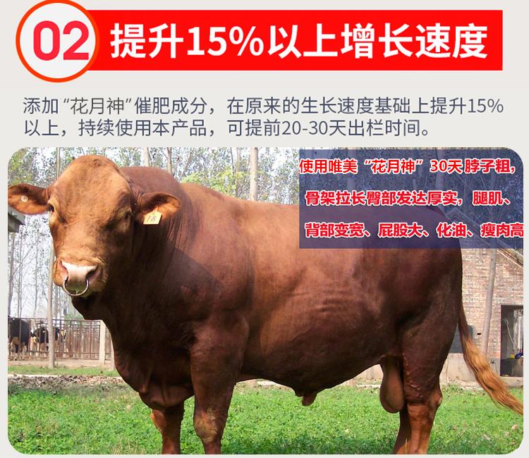 牛羊如何快速增肥催肥?牛羊增肥催肥药用什么好?