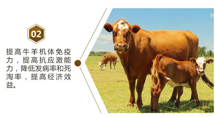 牛羊催肥药什么牌子的效果好?牛羊特效催肥剂直销包邮