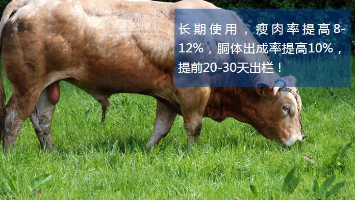 怎么才能让牛羊长的快?魔鬼牛羊催肥剂厂家直销