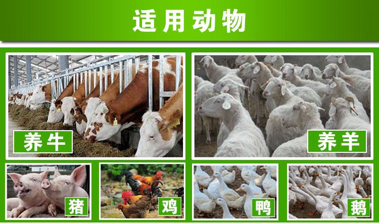 唯美秸秆发酵剂能发酵哪些饲料养羊?发酵饲料养羊组合方案