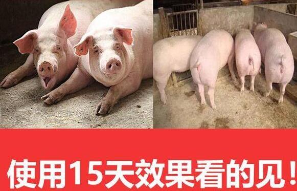 肥猪催肥剂优惠促销 200斤的猪一天吃几斤料