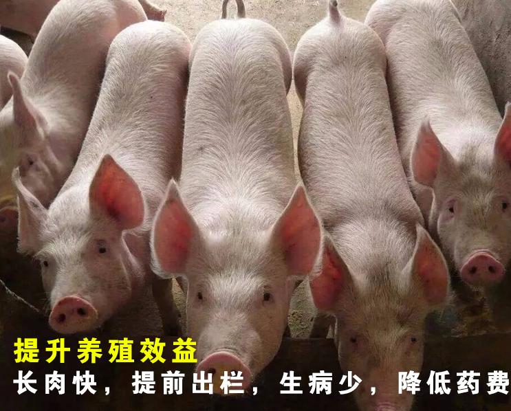 购买育肥猪催肥剂选择哪个厂家的可靠?