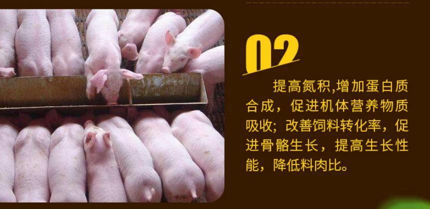 猪催肥剂使用效果