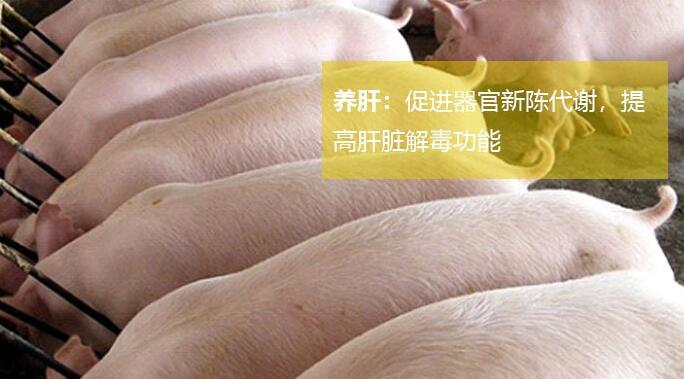 如何给育肥猪快速催肥?