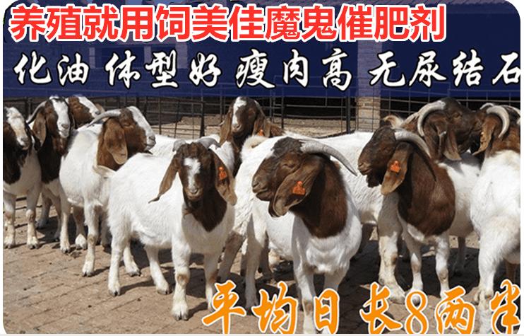 羊吃什么长得快?肉羊吃什么长得快还便宜?