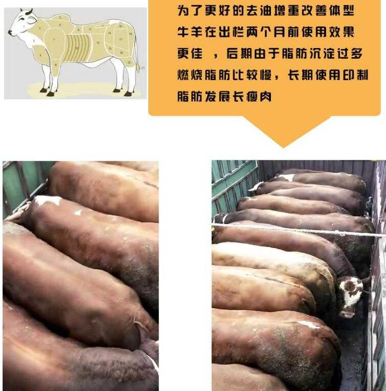 牛吃什么长得胖?