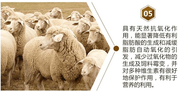 羊吃什么长肉多?育肥羊需要注意哪些问题?