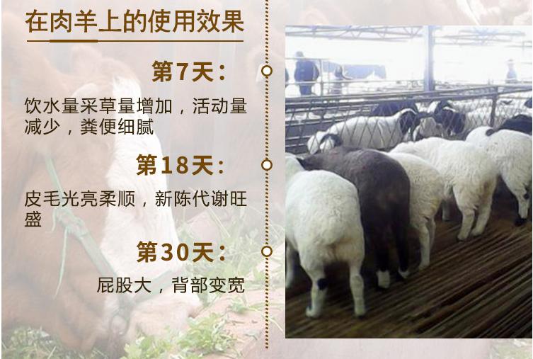 瘦羊增重催肥效果最好的预混料是那种?