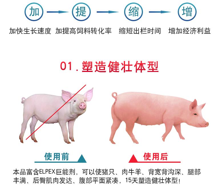 猪催肥剂日长三斤那家可靠